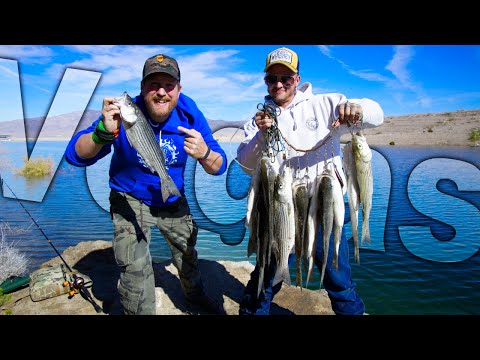 Catch And Cook Vegas Striped Bass At Lake Mead Fishing Trip