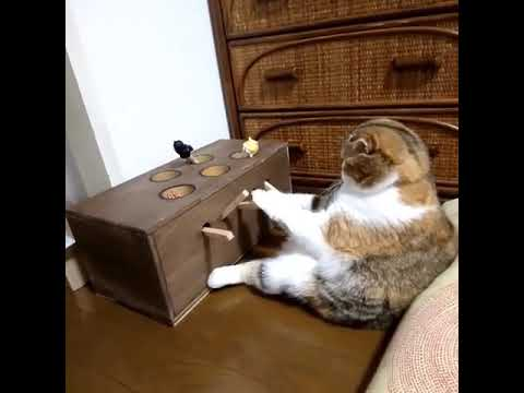 Cat Plays DIY Whack-A-Mole Game