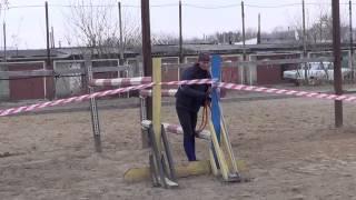 Adelia, 10 Years, Jumping( Horses Sport) / Аделия - напрыгивание на свободе