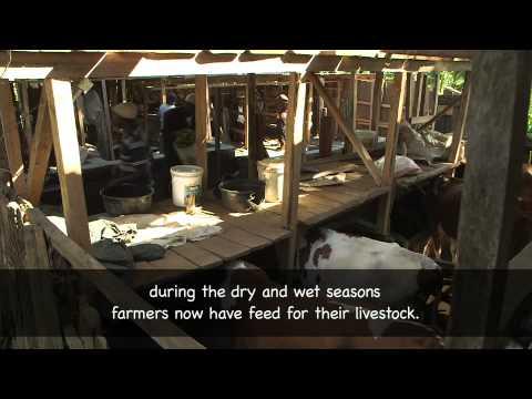Smallholder Milk Value Addition and Marketing