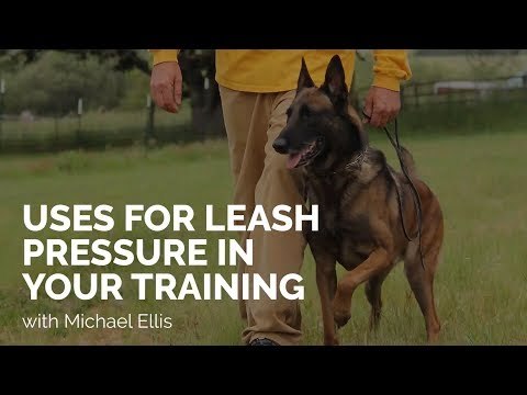 Uses for Leash Pressure in Training