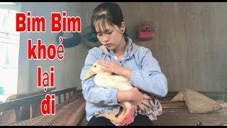 Tình bạn cao đẹp giữa người và Vịt. Xót xa khi nhìn thấy Bim Bim đỗ bệnh.