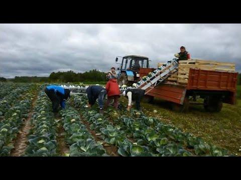 Навесной овощеуборочный транспортер скачать книгу элеватор