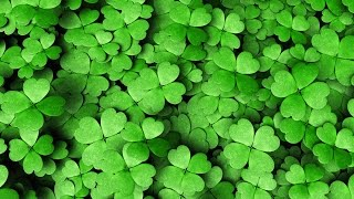 A deeper look into St. Patrick's Day  HD