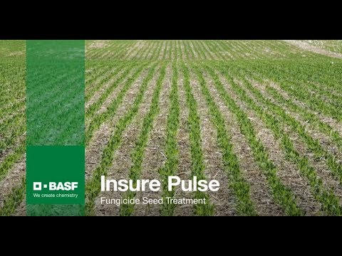 Insure Pulse peas and flax trial results and demonstration