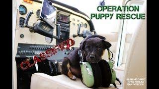 Operation Puppy Rescue - Page, AZ
