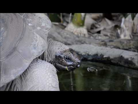 On Bindi's Island -- Giant Tortoises, Coconut and Jarvis, From the islands of Aldabra Atol