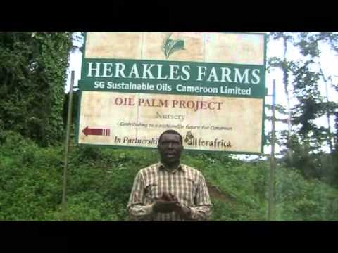 No to Herakles Farms' Investment in Cameroon