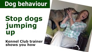Stop Dogs Jumping Up - Dog Training & Behaviour Therapy