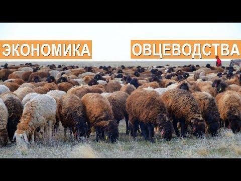 Экономика в овцеводстве.