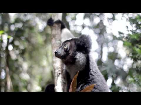 Madagascar Wildlife in Andasibe-Mantadia National Park
