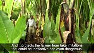 Daniel Assefa, Inventor of a Natural Pesticide, Ethiopia