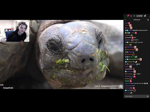 XQc Reacts To What's Inside A Turtle Shell? (with Chat)