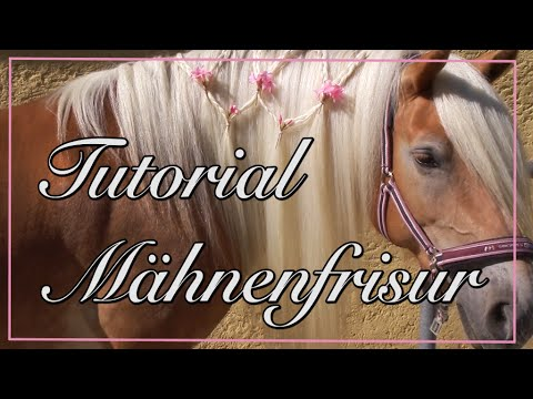 Tutorial Mähne Flechtfrisur Pferd Youtube