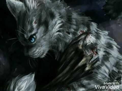 Коты-воители песня Ласточки и Грача - Сколько дней и ночей ты думаешь о ней