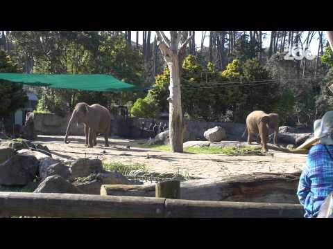 Thumbnail: Zoo Tales - Anjalee and Burma