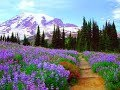 Best Winter❄⛄ Flowers🌸🌻🌹🌷🌼// Best flower plants for 🏡 Garden