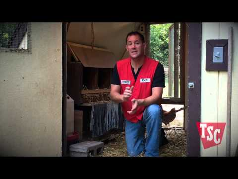 How to Choose a Chicken Coop