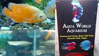 Aquarium Fish & Pets Shop at Nagampadam, Kottayam