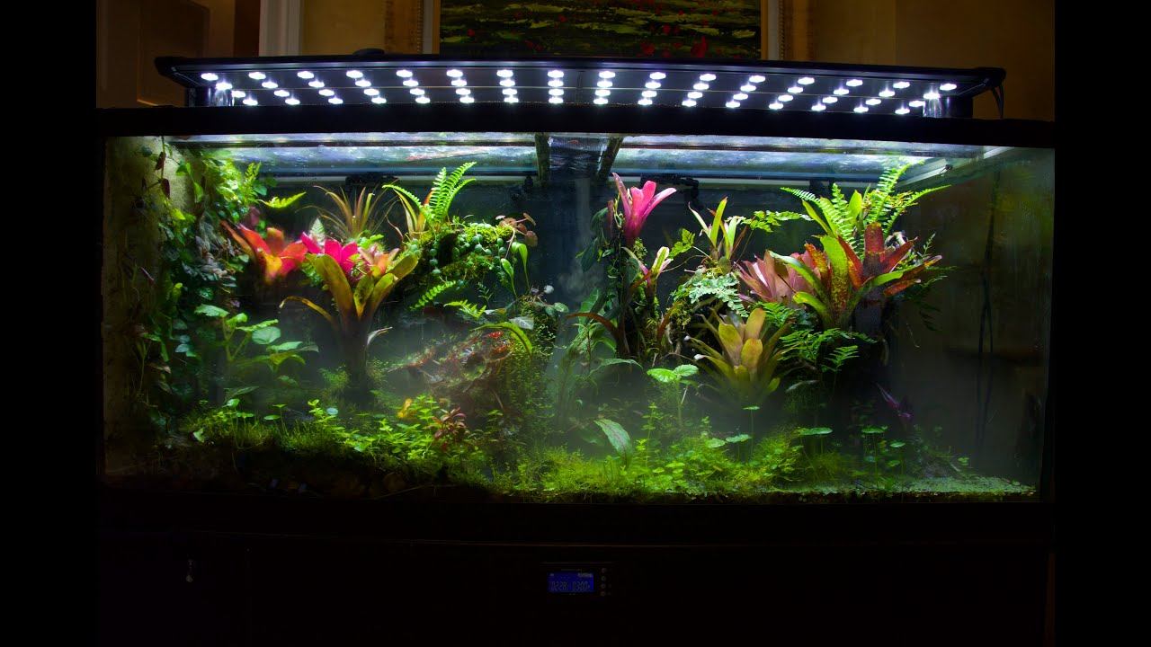 Display Vivarium Tour And Tips To Grow A Thriving Tank
