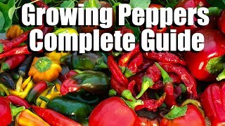 How to Grow Peppers from Seed to Harvest // Complete Guide with Digital Table of Contents