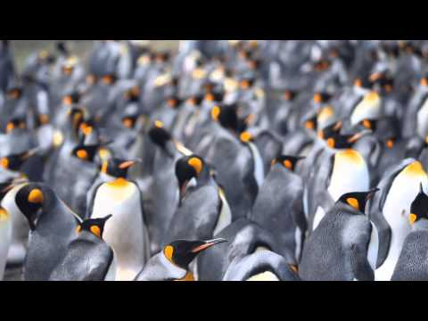 Volunteer Point Falkland Islands