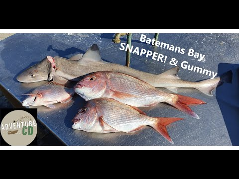 Fishing Batemans Bay Chasing Snapper - Solo