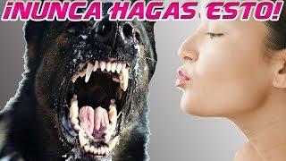 NUNCA hagas esto con un perro agresivo o miedoso y cómo poner un bozal