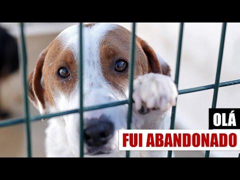 Um vídeo para todos os amantes de animais