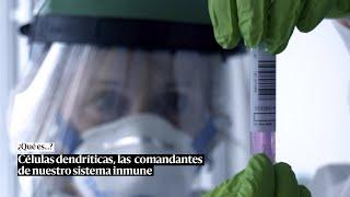 La célula dendrítica, o el