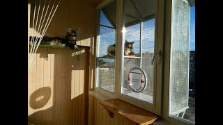 Оконный вольер (часть 3) # Выгул для кошек на окне