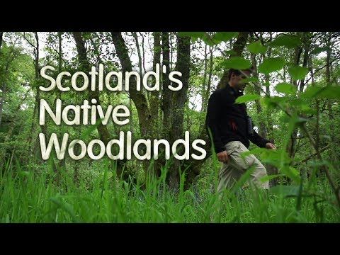 Scotland's Native Woodlands