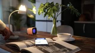 단미 고양이 무선 책상 LED 스탠드 (DA-LEDS0…
