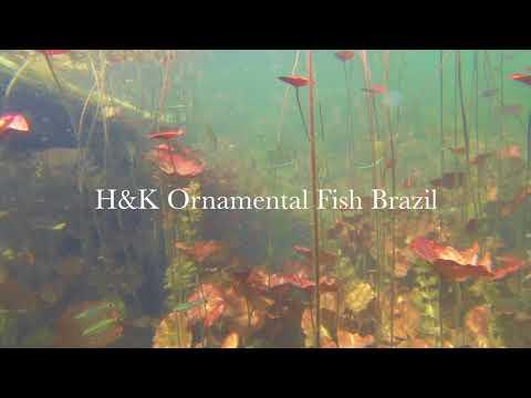 The True Angel Fish Biotope