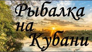 Рыбалка на реке Кубань 2021 Результативная ловля фидером на экспериментальную наживку Краснодар