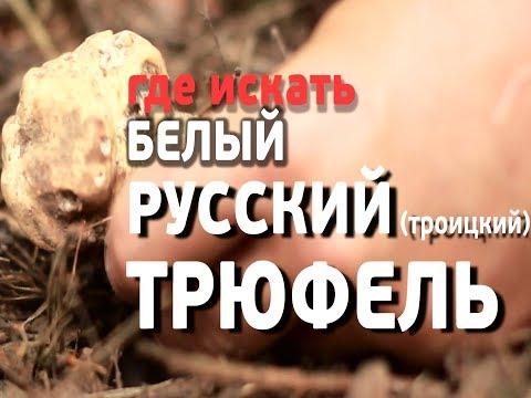 Как найти ТРЮФЕЛЬ - настоящий русский белый (Троицкий) truffle