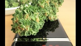 Amnesia Haze Autoflower - Window Sill Grow Diary [Day 91] - Harvest & Trimming