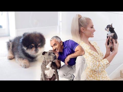 Hilton Pets meets Cesar Millan The Dog Whisperer