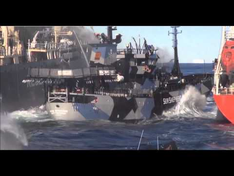 Ships Collide in Final Confrontation | Whale Wars from YouTube · Duration:  2 minutes 48 seconds