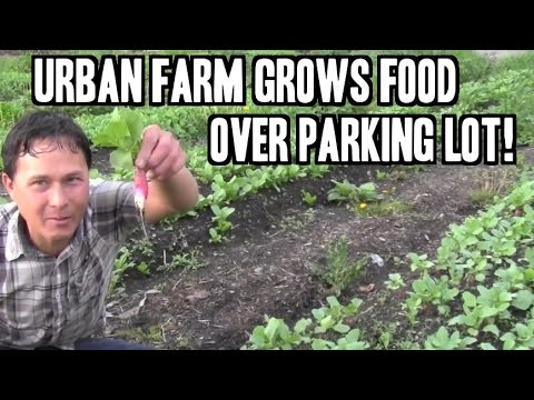 Urban Farm Grows Food over Parking Lot