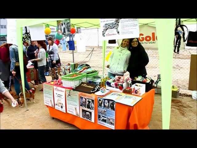 Stand ProGolden en la 3ª Trobada Animalista de Figueres