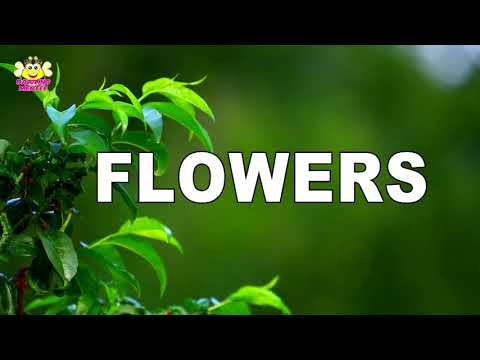 Learn Name Of Flowers With  Play Way Method