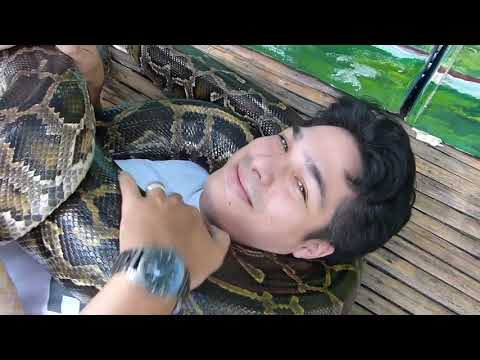 SNAKE (5 or 6 PYTHONS) MASSAGE COMES TO CEBU....TRAVEL, CULTURE, FUN.....