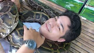 snake 5 or 6 pythons massage comes to cebu travel culture fun