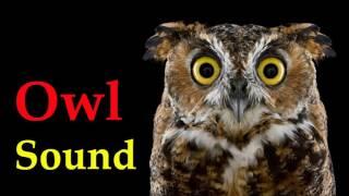 sound of owl at night - voice of bird