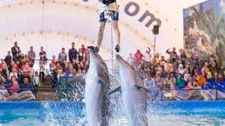 Дельфины. Дельфинарий в Бишкеке 13 03 2016(В Бишкек приехал дельфинарий и Настюша побывала на представлении всё что получилось смотрим на видео и..., 2016-03-17T16:49:29.000Z)