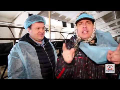 Сенсация в Наро-Фоминске. Корова Буханка и 100 литров уникального лечебного молока в ТЦ Каравай.
