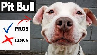 Pit Bull Pros And Cons   The Good AND The Bad!!