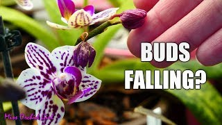 Orchid buds dry and fall! - Bud blast, causes and fixes!