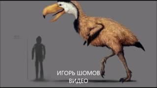 Птицы Ужаса. Что с ними случилось? Птицы Ужаса в Австралии.